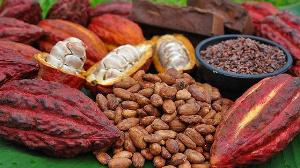 Le cacao camerounais