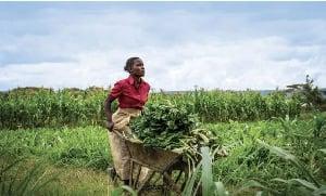 Le secteur agroalimentaire en pleine expansion au Cameroun