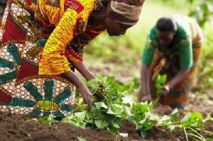Accompagner les producteurs agropastoraux des 221 villages