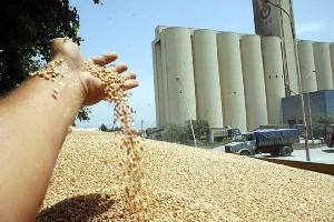 Le Cameroun  va manquer de blé