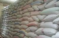 Toutes ces variétés de riz stockées dans les domiciles privés sont de bonne qualité