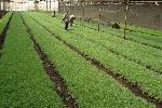 A horticulture farm