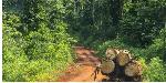 Cameroun : voici les chiffres effrayants de la déforestation
