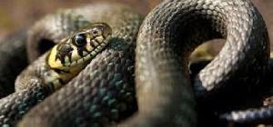 551 cas de morsures de serpents ont été enregistrés en 2019, ainsi qu'un nombre important de décès