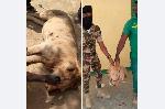 Un lion a attaqué plusieurs individus dans la localité de Woulki, arrondissement de Makary