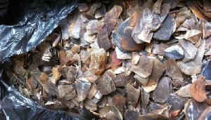 Près de 400 kg d'écailles de pangolin ont été récupérés lors de l'arrestation