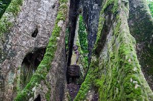 La forêt d'Ebo