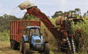 Récolte de canne à sucre de Sosucam