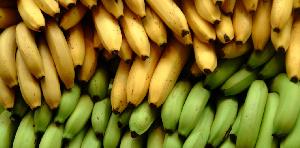 Le Cameroun est l'un des plus grands exportateurs de banane en Afrique