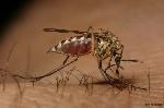 'Le paludisme doit même être érigé en pandémie'