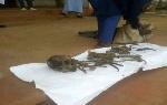 Le suspect a été présenté le 11 décembre 2020 à Garoua