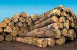 Le Cameroun exige désormais que l'origine légale du bois utilisé soit prouvée