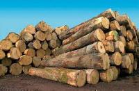 La décision est prise par le ministre camerounais des Forêts et de la Faune