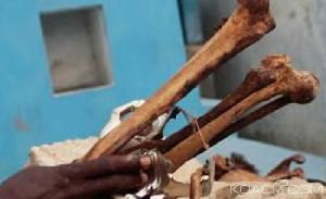 Voici comment fonctionne le florissant business de trafic d'ossements
