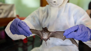 une autre théorie suggère que le virus se serait échappé d'un important centre de recherche