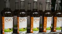 Covid-organic, la tisane malgache