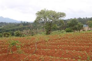 S'accaparer des terres au Cameroun au détriment des populations vulnérables et sans défense