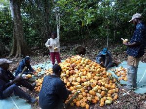 Ce projet dont le but est de faire du cultivateur un agent économique satisfait a été lancé hier