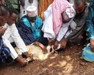 Immolation d'un bélier à l'occasion de la Tabaski