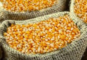 En quelques semaines, le prix sur les marchés de Ngaoundéré est passé de 8 000 à 16 000 FCFA, le sac