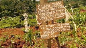 Epidemie Cameroun Vol