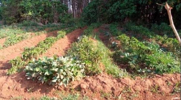 Aider le Cameroun à développer des services climatologiques.