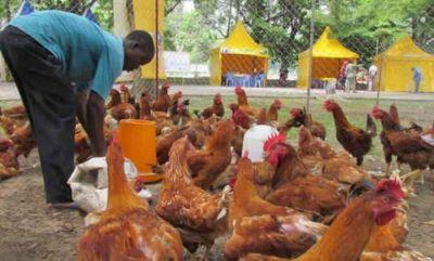 Vers la fin de l'épizootie de la grippe aviaire