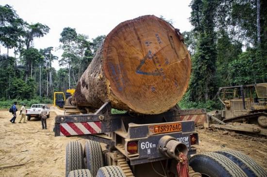 Une exploitation forestière du bois